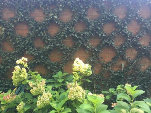 Wall Lattice